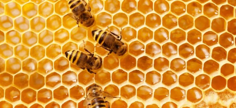 Honeybees and people alike enjoy and benefit from honey. (Image credit: Shutterstock)