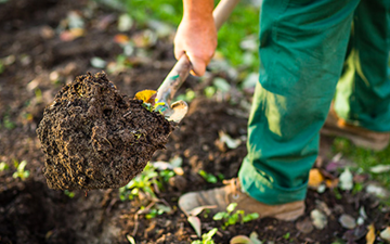 Rich Manure and Garden Soil